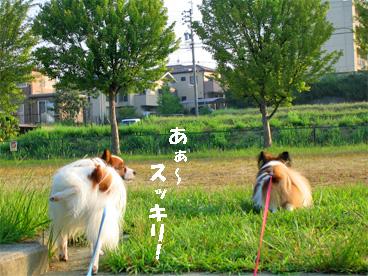 yuzukota080917-1.jpg