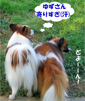 yuzukota080923-1.jpg