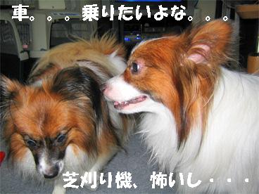 yuzukota080923-2.jpg