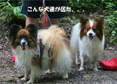 yuzukota080927-1.jpg