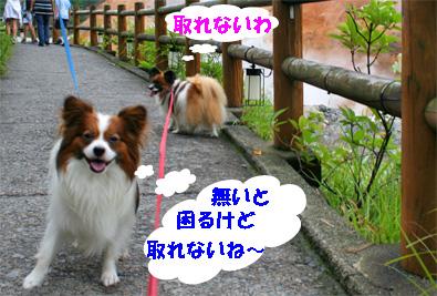 yuzukota080927-2.jpg