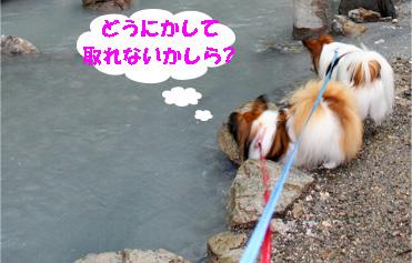 yuzukota080927-3.jpg