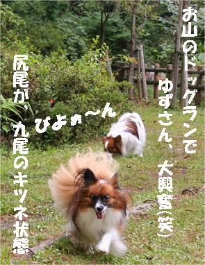 yuzukota080928-3.jpg