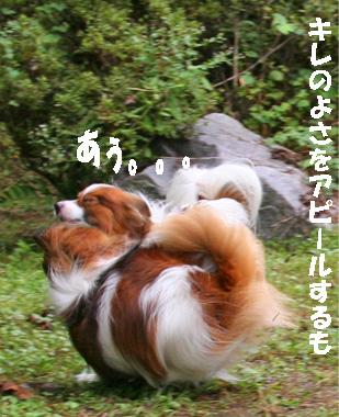 yuzukota080928-4.jpg