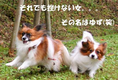 yuzukota080928-6.jpg