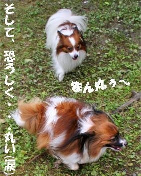 yuzukota080928-7.jpg