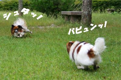 yuzukota081002-1.jpg