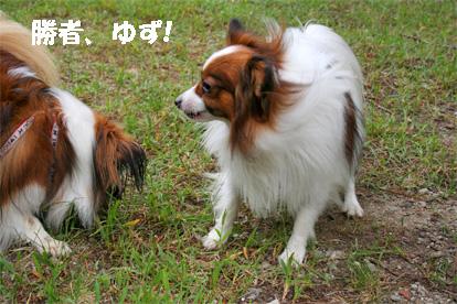 yuzukota081002-10.jpg