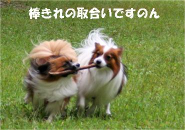 yuzukota081002-6.jpg