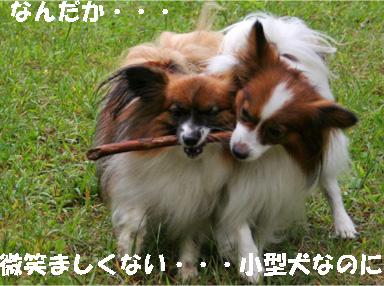 yuzukota081002-7.jpg