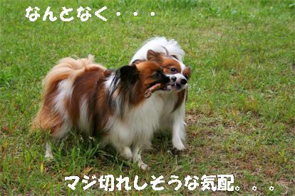 yuzukota081002-8.jpg