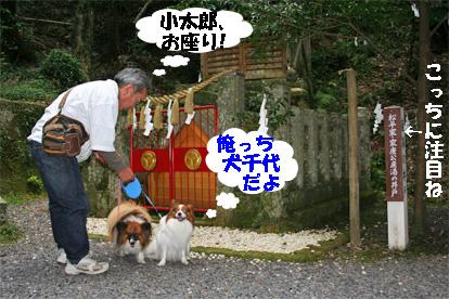 yuzukota081003-1.jpg