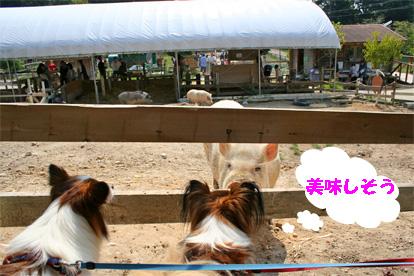 yuzukota081004-1.jpg