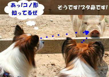 yuzukota081004-2.jpg