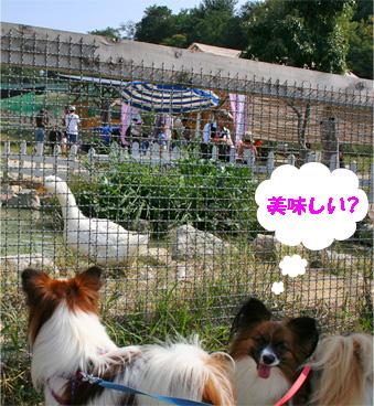 yuzukota081004-3.jpg