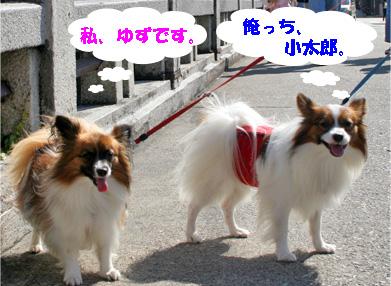 yuzukota081019-1.jpg