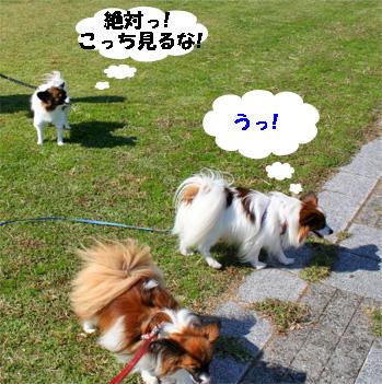 yuzukota081101-1.jpg