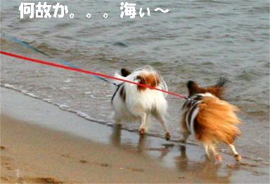 yuzukota081102-1.jpg