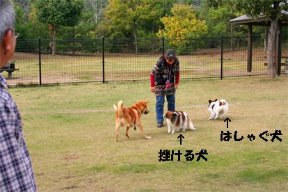yuzukota081103-1.jpg