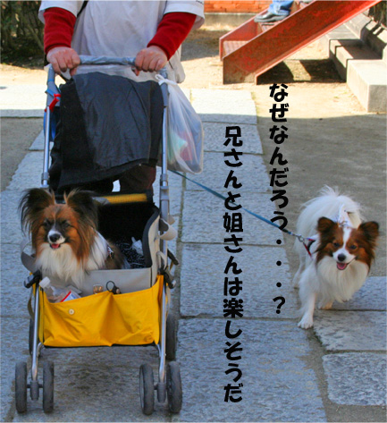 yuzukota090215-1.jpg