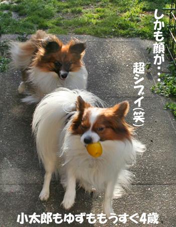 yuzukota090305-2.jpg
