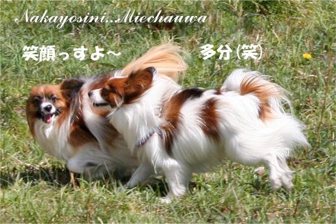 yuzukota090330-1.jpg