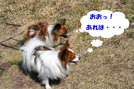 yuzukota090330-4.jpg