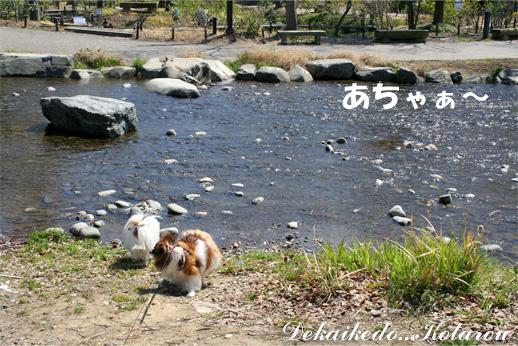 yuzukota090331-1.jpg