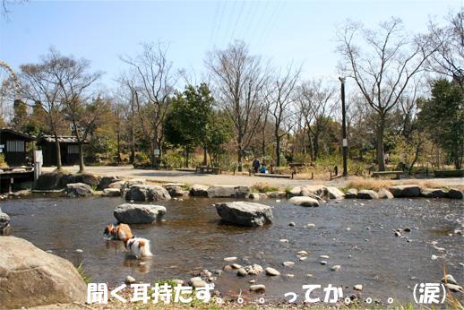 yuzukota090331-2.jpg