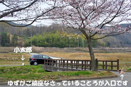 yuzukota090407-1.jpg
