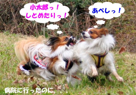 yuzukota090407-2jpg.jpg
