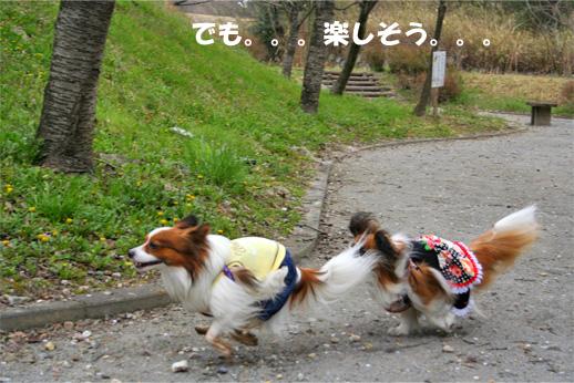 yuzukota090407-3.jpg