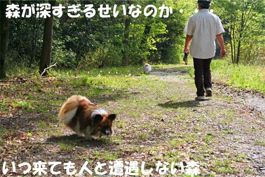 yuzukota090420-1.jpg