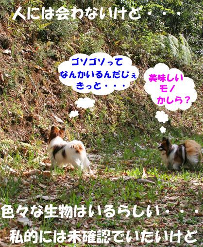 yuzukota090420-2.jpg