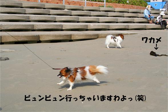yuzukota090529-1.jpg