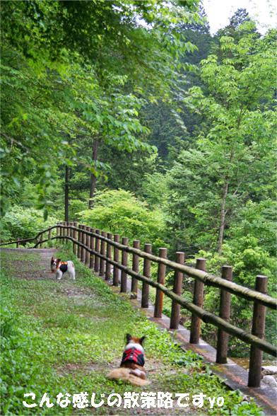 yuzukota090612-2.jpg