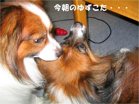 yuzukota090709-1.jpg