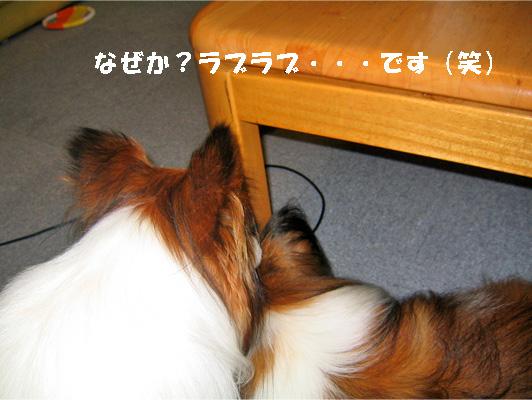 yuzukota090709-2.jpg