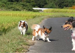 yuzukotabura061003-1.jpg