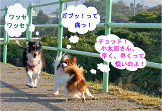 yuzukotabura061015-3.jpg