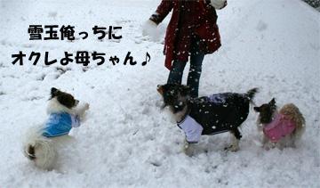 yuzukotabura070107-1.jpg