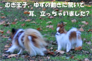 yuzumuluchan080111-1.jpg