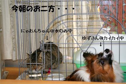 yuzunyao080215-1.jpg