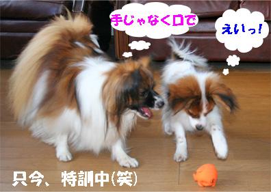 yuzusora080109-1.jpg
