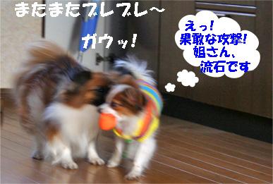 yuzusora080110-3.jpg