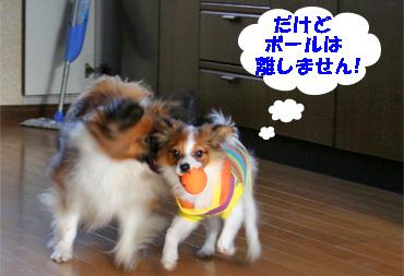 yuzusora080110-4.jpg