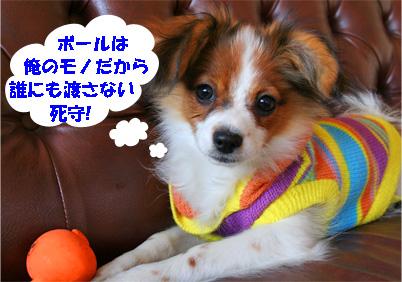 yuzusora080110-5.jpg
