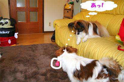 yuzusora080328-1.jpg