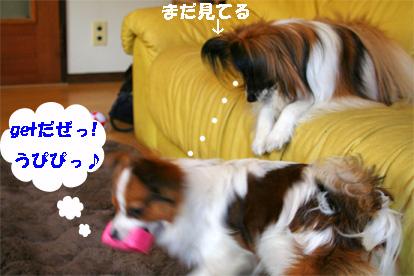 yuzusora080328-2.jpg