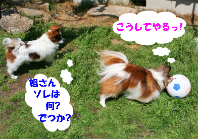 yuzusora080401-1.jpg
